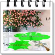 Cây hoa hồng giả đẹp